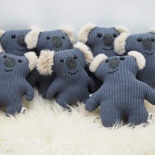 Koala Spendenaktion: Vielen Dank an alle die geholfen haben!